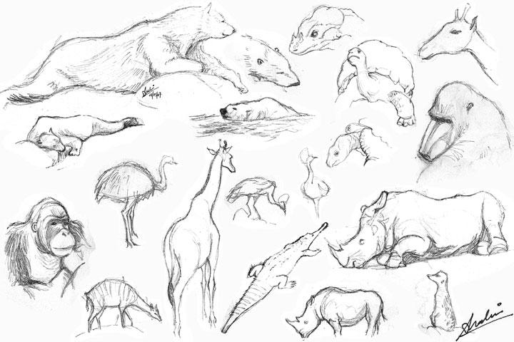 Sketches – zoo animals