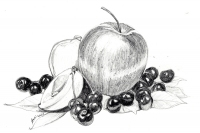 2015_DRAW_pencilfruits