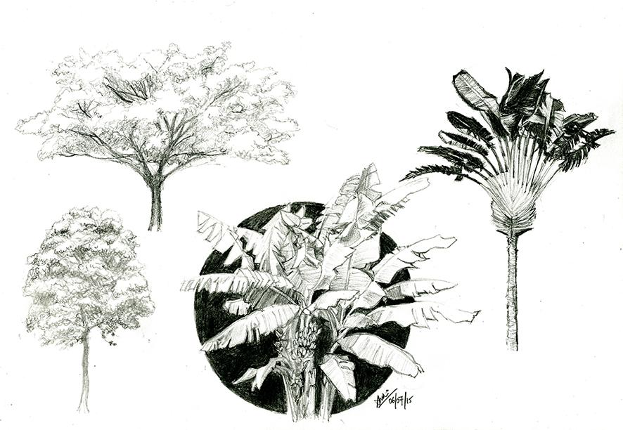 2015_DRAW_Wk12_trees